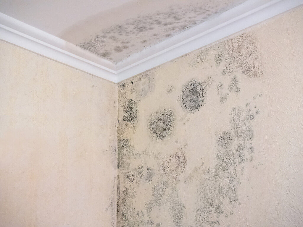 Mold Insurance Claims